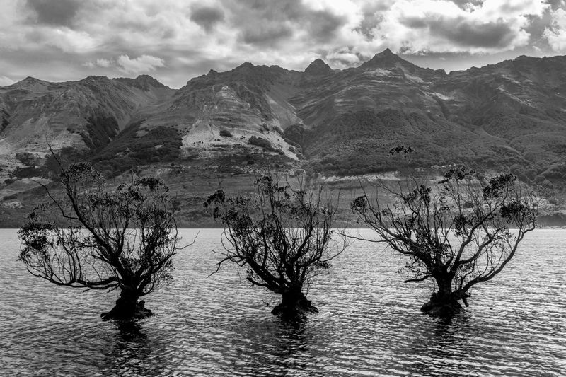 surrealista paisaje Eyemphotography Photography Glenorchy New Zealand South Island Blackandwhite Black And White Mountains Lake Portrait Beauty In Nature Beautiful Nature Photography Nature_collection Surrealism Mountain Outdoors Nature Scenics Landscape Cloud - Sky Beauty In Nature Tree No People Sky