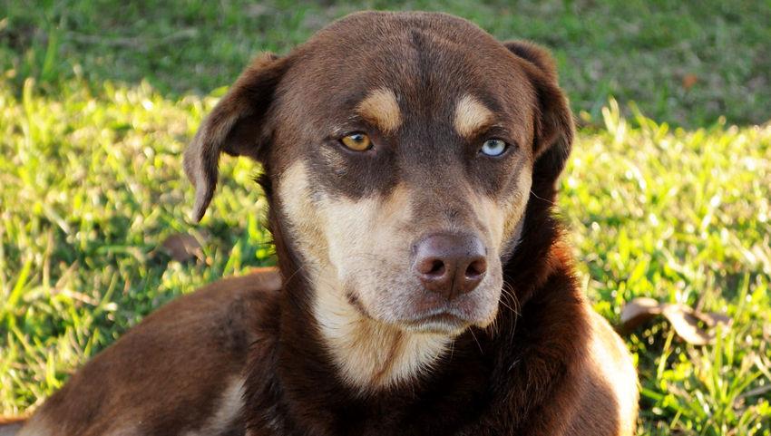 Bicoloredeyes EyeEm Best Shots Dog Love Dogs Eyeempetslover Domestic Animals Dogs Of EyeEm Pets Portrait Dog Looking At Camera Sunlight Close-up Grass