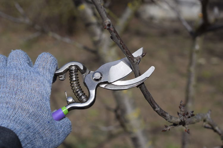 Close-up of hand using pruning shears on branch
