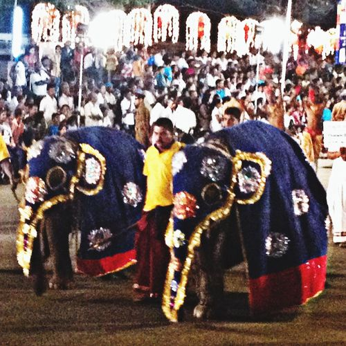 Little elephants at perahera