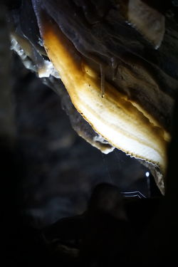 Stalactite  Animal Themes Animals In The Wild Beauty In Nature Cave Close-up Cold Temperature Dripping Food Food And Drink Freshness Geological Geological Formation Geology Indoors  Nature Night No People Outdoors Rock - Object Stalacmite Stalagnate