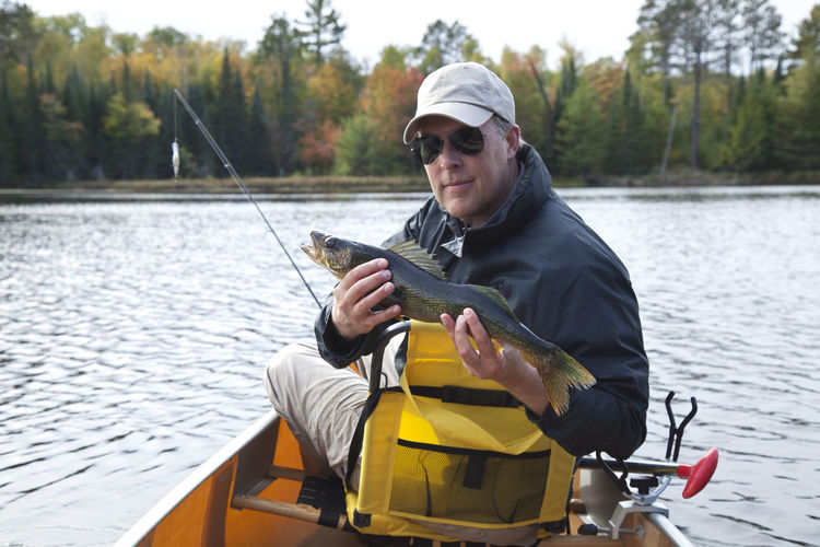 Smiling fisherman holds a nice walleye on a northern Minnesota lake during autumn 50s Autumn Canoe Man Minnesota Trees USA Activity Catch Of Fish Fish Fisherman Fishing Holding Lake Leisure Activity North Outdoors Pine Tree Recreational Pursuit Rod Smiling Sport Sunglasses Walleye Water