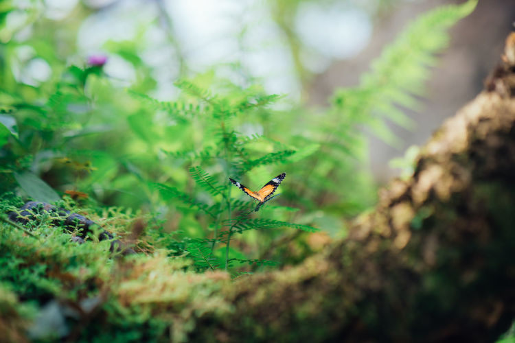 Nature Leaf Animal Tree Butterfly Forest Insect Plant Land Small Growth Invertebrate Beauty In Nature No People Animals In The Wild Green Color Georgetown Penang Selective Focus Animal Themes One Animal Animal Wildlife Plant Part Entopia Outdoors EyeEm Selects