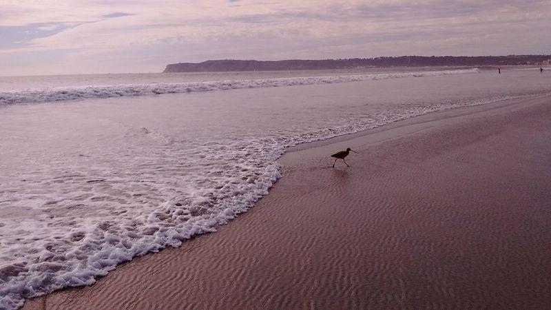 Bird Sand Piper Sand Dune Arid Climate Sand Sunset Adventure Landscape Shore Coast