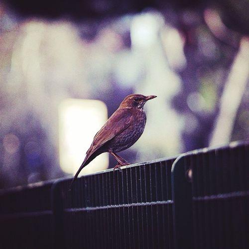 Ucceli Naturalhair Volare Taking Photos Enjoying Life Pets Corner Urbanstyle Eyemphotography Goodmorning EyeEm