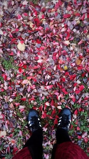 Low Section Shoe Human Leg Standing Personal Perspective One Person Day Outdoors Fall Beauty Fall Leaves Fall Colors Fall Season Autumn Colors Legsselfie Human Body Part Red Color Red Leaves