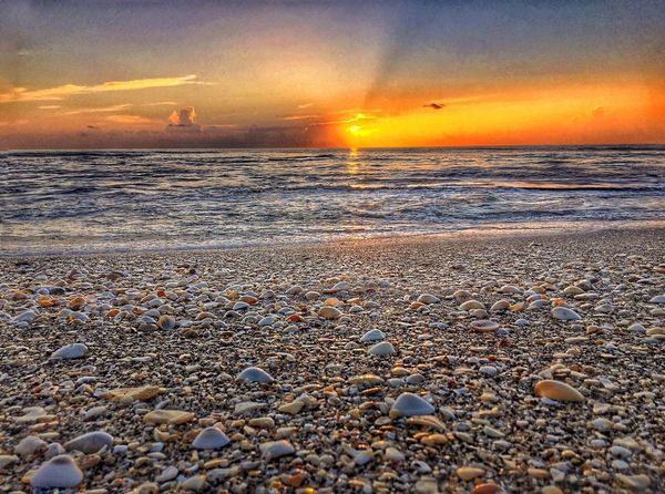 Beach shells sunrise Nature Nature_collection Landscape_Collection Clouds And Water Water_collection Sunrise_Collection Sunrise Beech Sea Shells 🐚 Seascape Florida