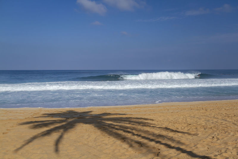 Palm Tree Shadow on the beach and a surfer on a wave Hawaii North Shore Oahu Oahu Surf Aquatic Sport Beach Beauty In Nature Horizon Horizon Over Water Motion Nature North Shore Outdoors Palm Tree Shadow Sand Scenics - Nature Sea Shadow Sky Sport Surfing Tranquil Scene Tranquility Water Wave