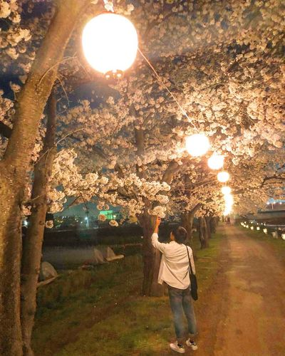 Cherry Blossom Sky Cherry Blossoms Real People One Person Plant Rear View Tree Lifestyles Leisure Activity Men Nature