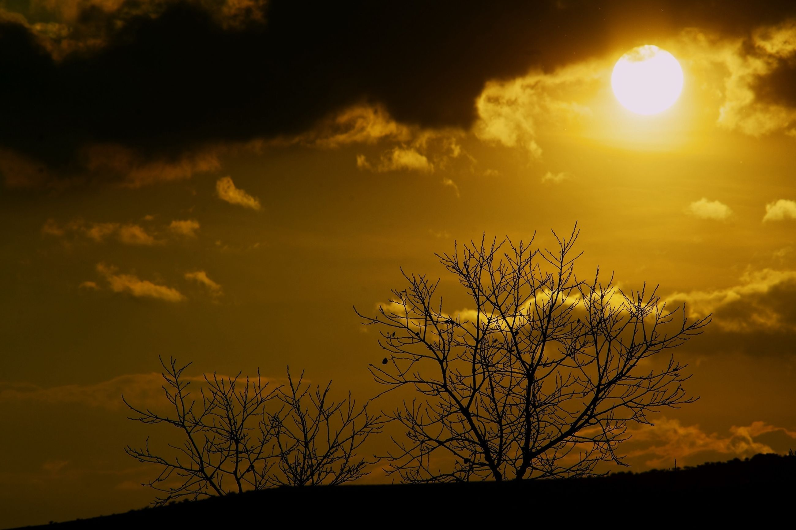 sunset, silhouette, sky, sun, tranquility, beauty in nature, scenics, bare tree, tranquil scene, tree, orange color, low angle view, branch, nature, cloud - sky, idyllic, dramatic sky, sunlight, back lit, outdoors