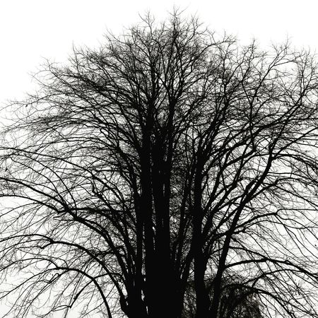 Sky Tree Outdoors No People Day Nature Graphic Nature Black And White Branch Beauty In Nature Backgrounds Full Frame Tree Low Angle View Growth Nature