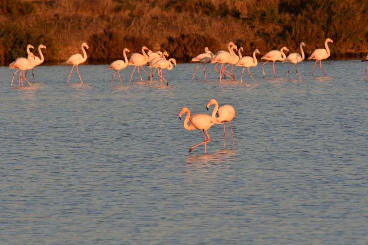 Flamingo Bird Animal Wildlife Nature Reflection Animals In The Wild Colony No People Water Outdoors Large Group Of Animals