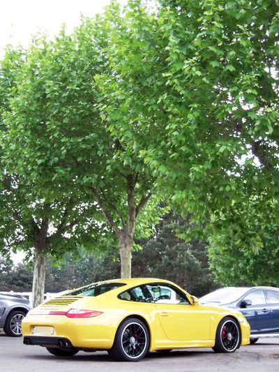 10 Mpx carrera car photography Carrera4GTS Gts One Porsche Yellow Porsche Carrera 4 Coupe Sport Green Color Green Trees Motor Vehicle Parking And Cars Sport Car Trees Yellow Yellow Color Car Photography Full Lenght Vertical Photography