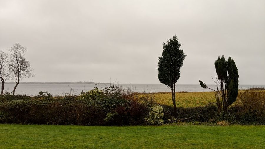 Danish coast. Denmark Danish Coast Coast Of Denmark Nature Beauty In Nature Landscape Green Trees Beauty Simplicity Grass Rainy Cloudy Clouds And Sky Tree Water Sky Grass Cloud - Sky
