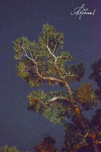 Outreach. Low Light Night Long Exposure Tree Stars High ISO