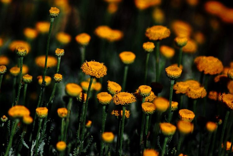 Close up view of yellow wildflowers