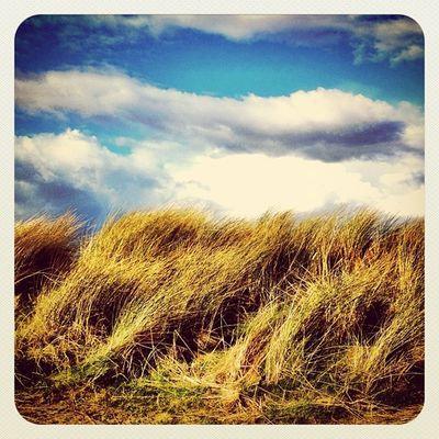 Windy day on beach ?? #seagrass #ireland #jj_forum #jj #gf_ire #ebstyles_gf #earlybirdlove #sky #cloudporn #malhide Sky Ireland Cloudporn Jj  Earlybirdlove Jj_forum Ebstyles_gf Gf_ire Malhide Seagrass