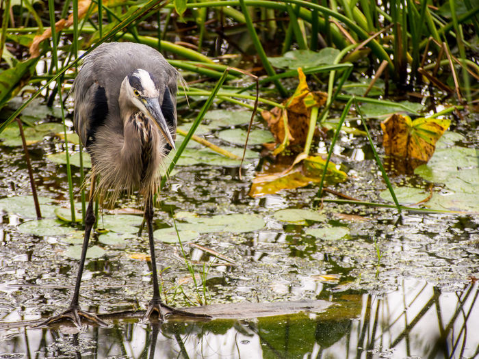 Close-up of bird perching on plant in lake