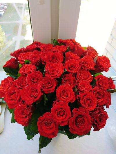 High angle view of red roses
