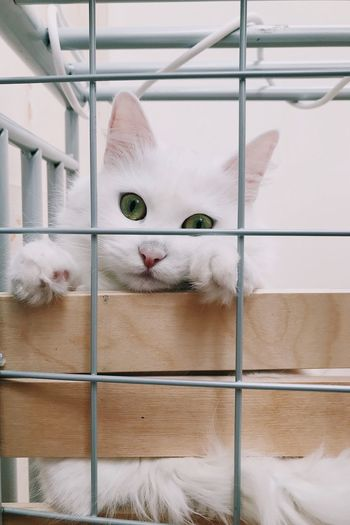 Close-up portrait of white cat by metal