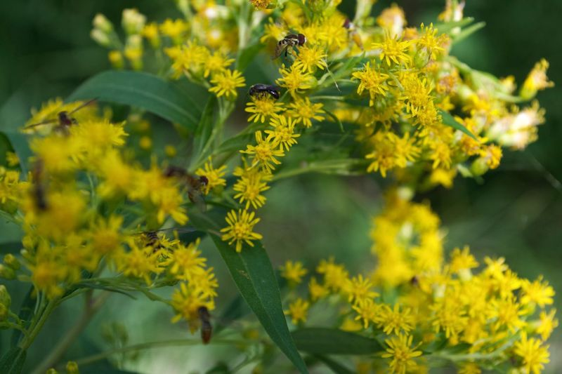 Insects  Yellow Flowering Plant Plant Flower Beauty In Nature Growth Freshness Nature Close-up No People Focus On Foreground Green Color Day Animal Wildlife Plant Part Animals In The Wild Springtime Decadence