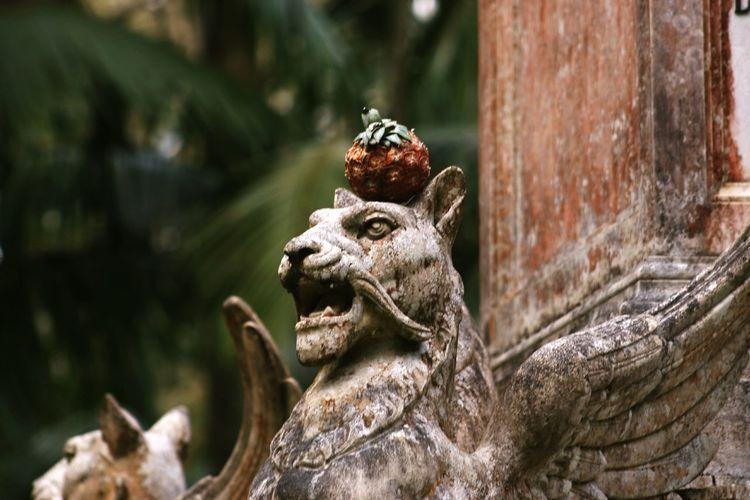 Pineapple on gargoyle sculpture on wall