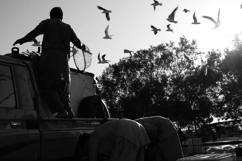 People With Car Against Flock Of Birds In Sky