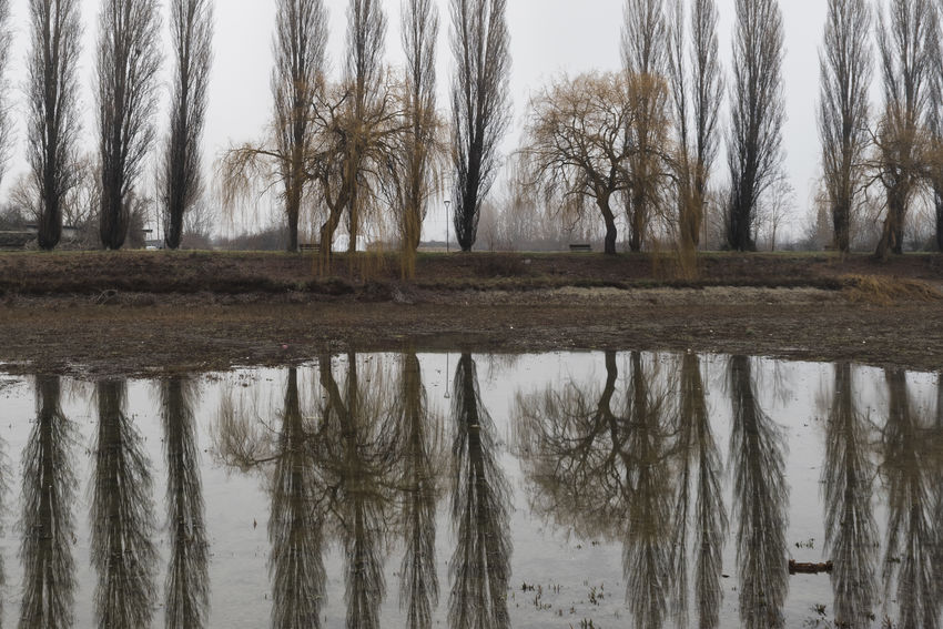 Riflessi -Inverno -Abruzzo Reflection Tree Water Plant Tranquility No People Nature Tranquil Scene Day Scenics - Nature Fog Pioppi Salici Piangenti Inverno Riflessi Abruzzo Italy Italia Ortucchio