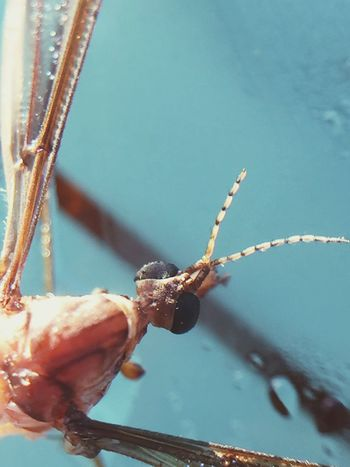 Showcase April Macro_collection Insect Super BIG Photography Check This Out