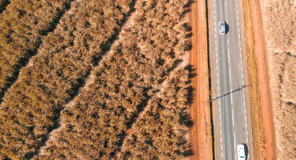 High angle view of plants on land
