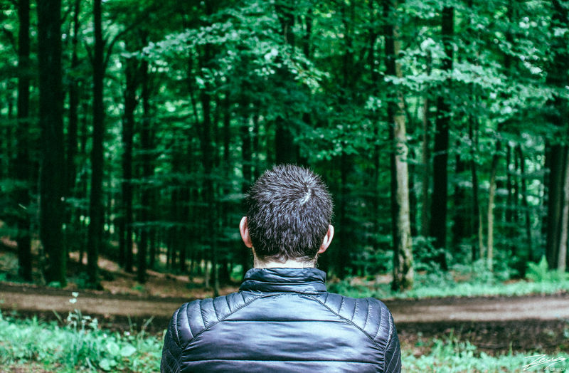 Rear view of man looking at trees in forest