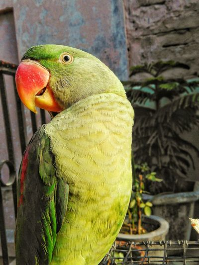 My pet Noora First Eyeem Photo