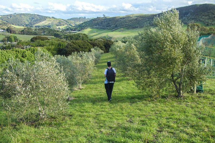 Teenage Boy In Orchard