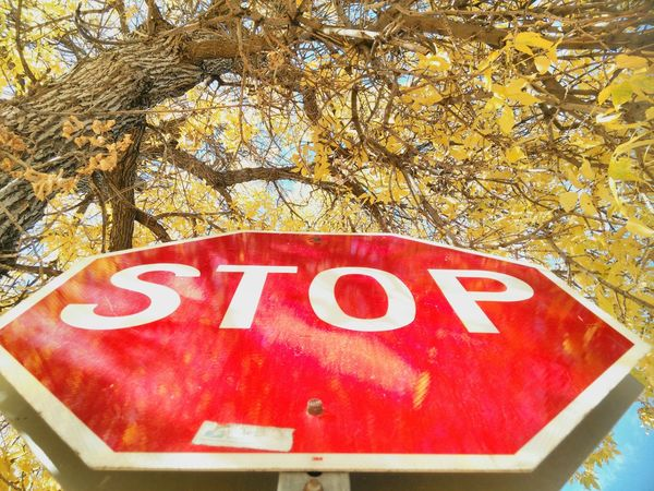 Text Western Script Red Tree Communication Capital Letter Information Sign Close-up Branch Park - Man Made Space Outdoors High Section Yellow Leaves Day Vibrant Color Commercial Sign No People Stop Sign Signporn Signstalkers Warhol Inspired