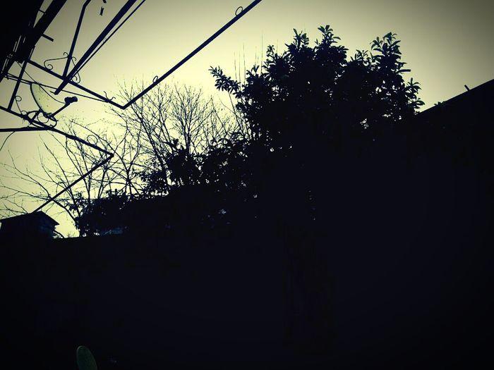 ╭( ̄▽ ̄)╮ Cucoloris