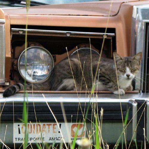 Cuidate Gato Cat Car Auto