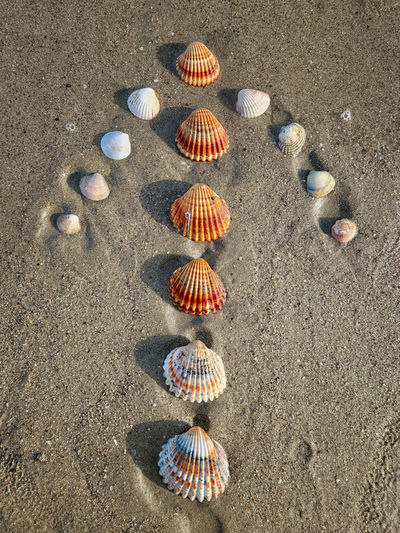 High angle view of shells on sand