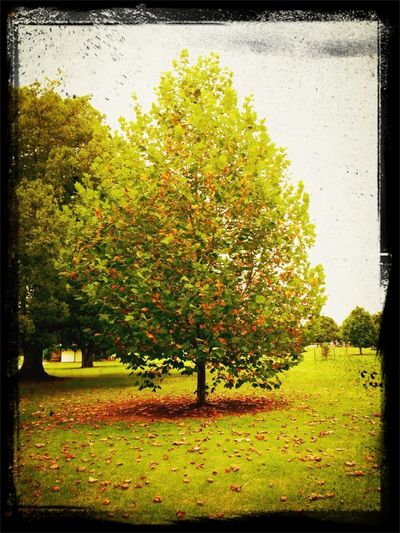 Retard tree. It thinks it's autumn already.