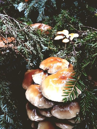 fungus among us Mushroom Fall PNW RainyDay High Angle View Nature No People Day Close-up Outdoors