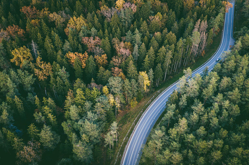 High angle view of road amidst trees in forest during autumn