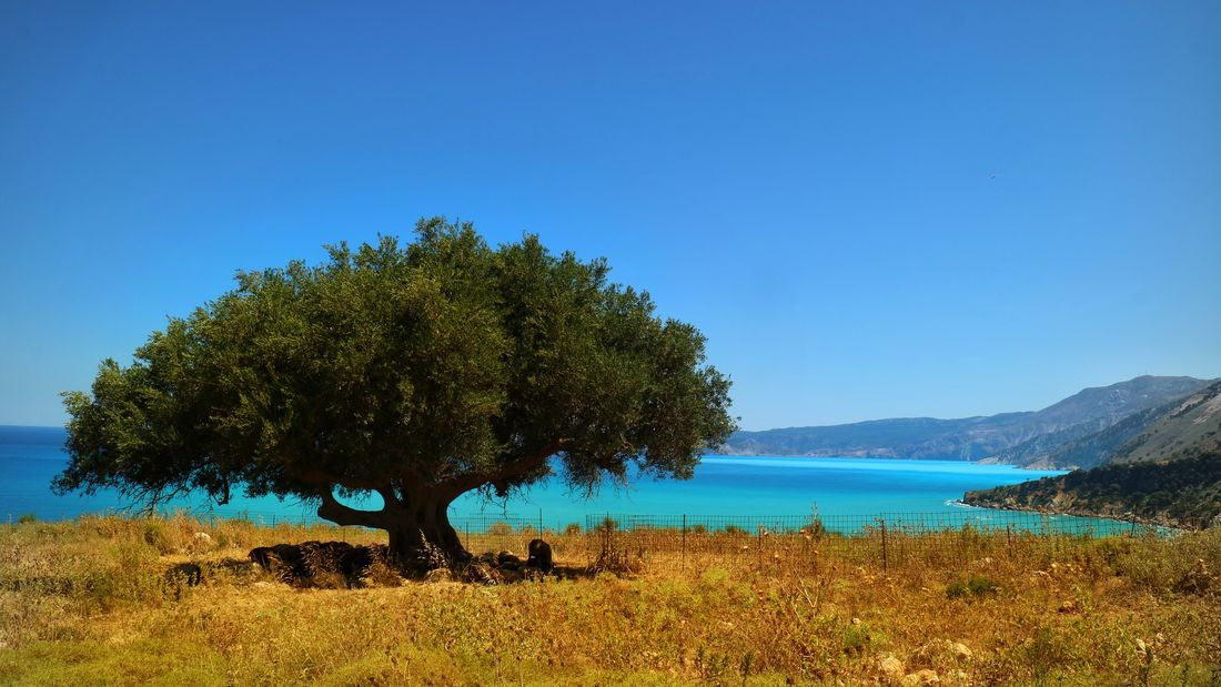Blue Tree Nature Scenics Beauty In Nature Clear Sky Tranquil Scene Growth Outdoors Day Water Tranquility No People Mountain Sky Kefalonia Kefalonia, Greece Landscape Tranquility Lamb Farming Shadow Under Tree Lamb In Shadow