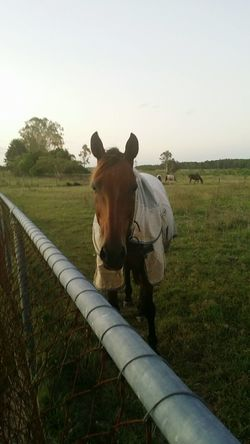Horse. Horse Horses うま Pony Club Rural Rural Scene