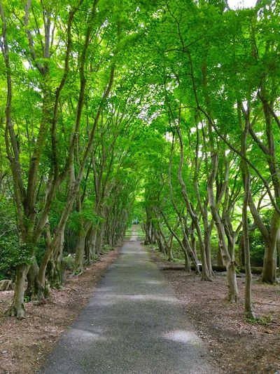 Green Green Color Green Green Green!  Tree Trees Fresh Freshness Fresh Air... Fresh Air And Sunshine Great Nature Road Bush Silence Walking Jogging Tree Road Urban Nature Breath Deep Breath Calm Slow Picnic Climbing Mountain