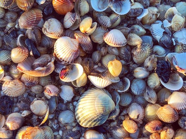 • At the beach • EyeEm Nature Lover EyeEm Best Shots - Nature Mobilephotography Full Frame Backgrounds Shell No People Textured  Seashell Animal Wildlife Animal Shell Close-up Day Nature Natural Pattern Directly Above Still Life Detail Large Group Of Objects
