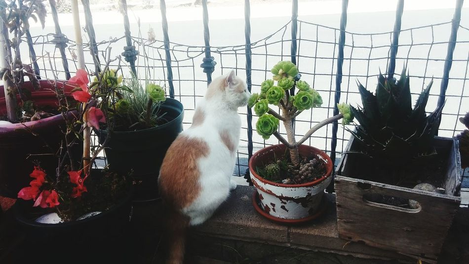 Greenhouse Potted Plant Plant