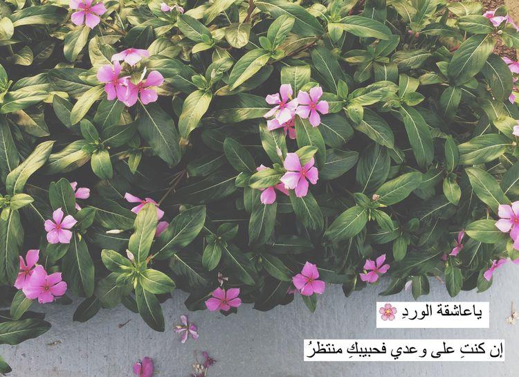 مساء_الخير ?