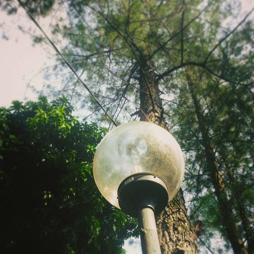 Minimalist 'lamp' Plant Growth Lamp Streetphotography Tree Sky Architecture Built Structure EyeEmNewHere EyeEm Indonesia Minimalist Photography  Minimalist Photography EyeEmNew