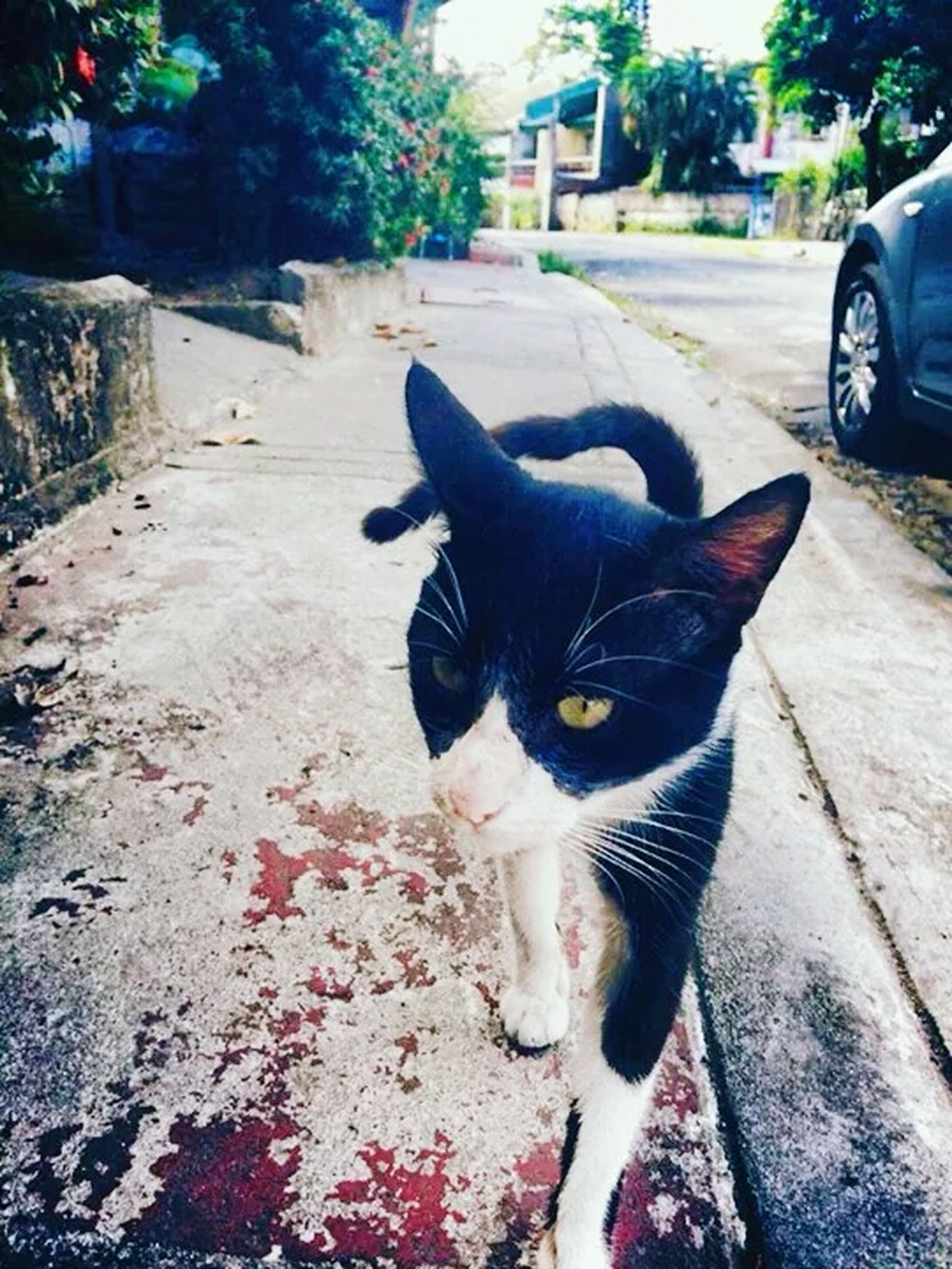 pets, one animal, domestic animals, animal themes, mammal, domestic cat, street, cat, car, land vehicle, feline, transportation, portrait, looking at camera, dog, road, mode of transport, whisker, outdoors, black color