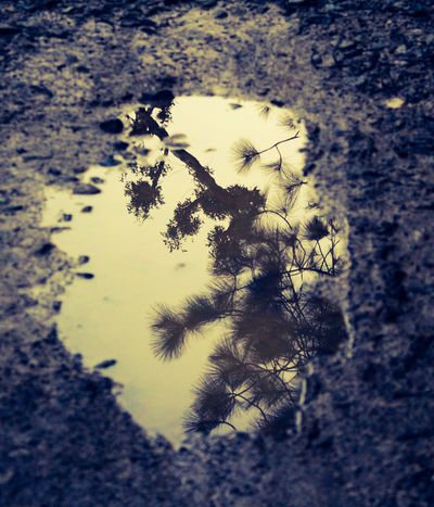 Save the world , save the trees Close-up Puddle No People Outdoors Nature Day Tree Image In The Water On Road. Reflection Trekking GoodThoughts The Week On EyeEm EyeEmNewHere Freshness Peace ✌ Haze Weather Perspectives On Nature Rethink Things Postcode Postcards Second Acts