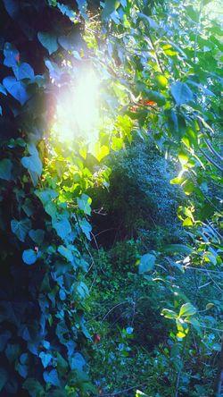 Summerdays  Summer2016 EyeEm Nature Lover Eye4photography  Nature Nature_collection Nature Photography Tree_collection  Green Sunset_collection Sun Relaxing The Moment-2016 Eyeem Awards OpenEdit The Traveler - 2016 Eyem Awards